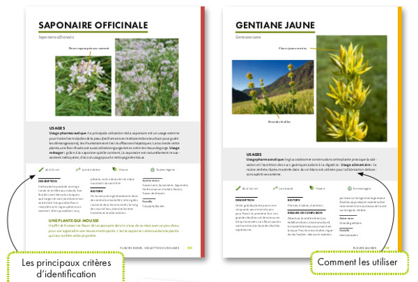 plantes sauvages utiles 2018 fiches